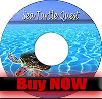 Sea Turtle Quest